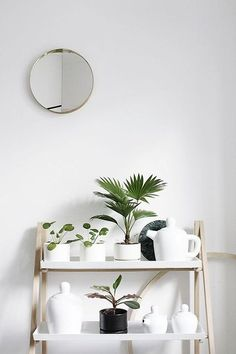 Plant Shelfie {and a new blog series}
