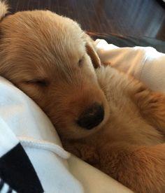 Good-night Buddy