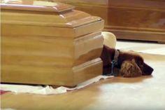 Um cão permaneceu junto ao caixão do dono, que morreu na sequência do sismo que…