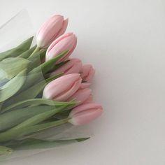 Trendy Plants Aesthetic Girl 35 Ideas – Best Home Plants Baby Pink Aesthetic, Aesthetic Colors, Aesthetic Girl, Korean Aesthetic, Aesthetic Pictures, Aesthetic Fashion, Plant Aesthetic, Flower Aesthetic, Pretty In Pink