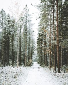 urbanissues: a-joyfuljourney: . - -lets Go Camping- For Emma Forever Ago, Beautiful World, Beautiful Places, Images Instagram, Winter Beauty, Winter Theme, Winter Colors, Narnia, Pretty Pictures