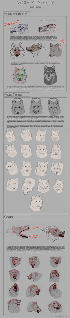 Wolf Anatomy - Part 3 by *Autlaw on deviantART: