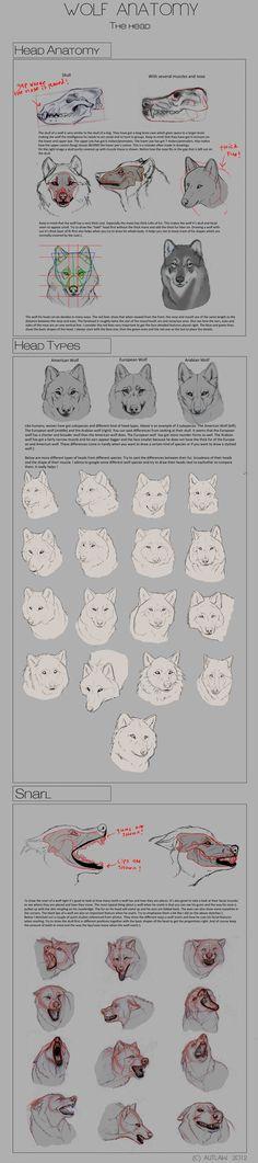 Wolf Anatomy - Part 3 by *Autlaw on deviantART: