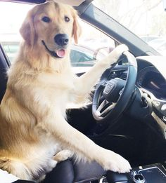 hop in? lets roll ❤
