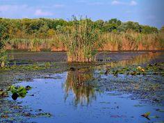A Tisza-tó mocsárvilág rejtélye, www.tavitura.hu