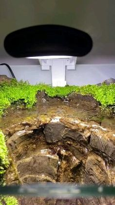 Biotope Aquarium, Aquarium Garden, Aquarium Landscape, Planted Aquarium, Aquarium Fish, Fish Tank Garden, Fish Tank Terrarium, Aquarium Terrarium, Garden Terrarium