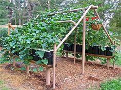 Verticle gardening Vine Trellis, Garden Trellis, Herb Garden, Garden Beds, Vegetable Garden, Trellis Ideas, Bean Trellis, Balcony Garden, Garden Playhouse
