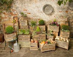 Horta em caixotes de madeira... Um luxo!!!