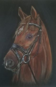 Drawings | Art Gallery Jose Animal Drawings, Art Drawings, Pastel Drawing, Art Gallery, Horses, Animals, Animales, Art Museum, Animaux