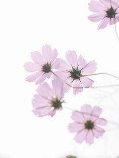 Little flower ★ iPhone wallpaper