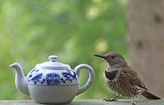 A Guest for Sunday Tea by Peggy Collins, via Flickr