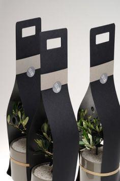 Piantina d' olivo in confezione regalo