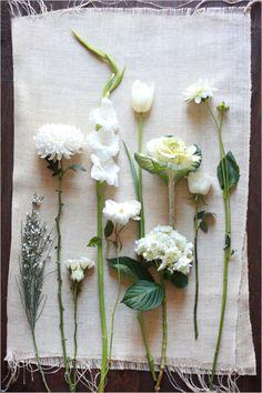 White wedding flower guide from Wedding Chicks Wedding Flower Guide, White Wedding Flowers, White Flowers, Beautiful Flowers, Wedding White, White Roses, Dry Flowers, Table Flowers, Green Flowers