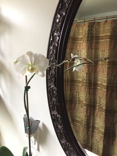 Orchid I bought in clearance section at Lowes. Look at the buds! Needed a little plant action in the bathroom.