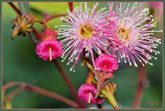 Pink Flower Story by MayEbony
