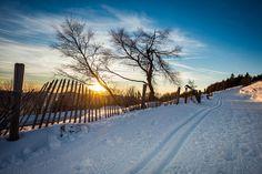 Skilanglauf ist IN: Der leise Sport begeistert mit neuer Lässigkeit. Überzeug dich selbst und steig mit uns in die Loipe.5 Gründe, warum du Skilanglauf lernen solltest. Steig, Snow, Outdoor, Travel, Cross Country Skiing, Hiking, Outdoors, Viajes, Destinations
