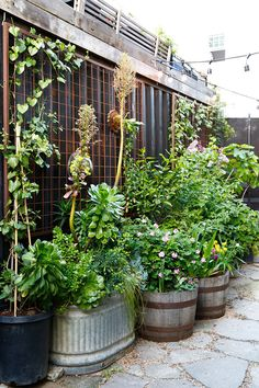 Lila B Design in the courtyard of Stable Cafe / San Francisco