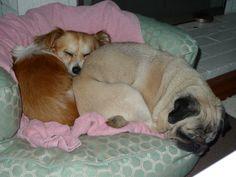 Cute friends cuddled up!
