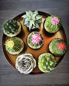 Are these real plants? No, *THESE* are matcha & chocolate Cacti & Succulents Cupcakes = CAKETUS? Happy Saturday everyone. Cupcakes Succulents, Kaktus Cupcakes, Beautiful Cakes, Amazing Cakes, Mini Cakes, Cupcake Cakes, Cupcake Toppers, Cactus Cake, Buttercream Flowers