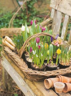 Plant bulbs in Fall for this spring bloom