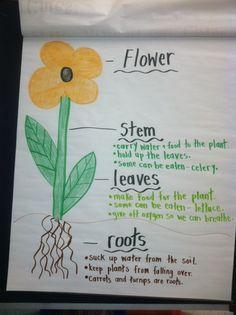Plant unit idea