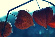 lanternis in aeri by nari-me.deviantart.com