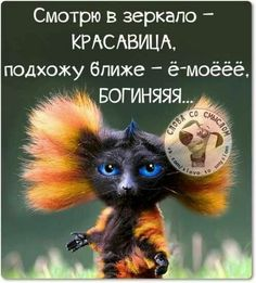 ⭐️Zаморочка⭐️ (@Zamoro4ka_msk) | Twitter Funny Qoutes, Funny Phrases, Funny Quotes About Life, Needle Felted Animals, Felt Animals, Funny Animals, Cute Halloween Makeup, Russian Humor, Funny Expressions