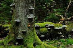 Trunks, Plants, Drift Wood, Planters, Plant, Planting