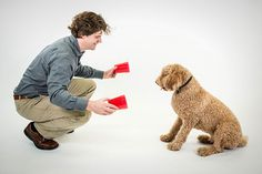 How smart is your dog? Find out with Dognition.