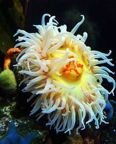 Delicious Bristleworm Trap Super Mini Size Marine Aquarium Usage Skilful Manufacture