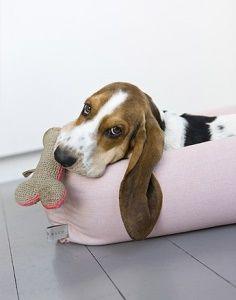 Basset Puppy!!