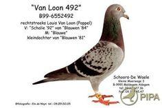 Pigeon crack Louis Van Loon - Poppel (BE) At the basis of spectacular performances in the pigeon sport worldwide! Racing Pigeons, Mario, Van, Birds, Sports, Image, Hs Sports, Bird, Vans