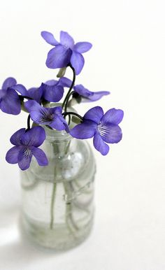 "Bisexual women and lesbians used to give violets to women they were wooing, symbolizing their ""Sapphic"" desire. In a poem, Sappho described herself and a lover wearing garlands of violets. The giving of violets was popular from the 1910s to the 1950s."