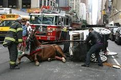 ... five misconceptions about the horse-drawn carriage industry in NYC