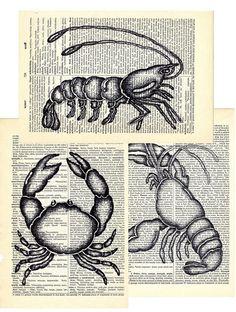 Set Crustaceans Shrimp Lobster Crab dictionary book pages collage art printprint print. $18.00, via Etsy.