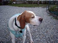 2007 12 04  Leda arriva nella sua nuova casa dopo esperienza canile