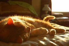 Warmth of the Sun by brendanmills, via Flickr