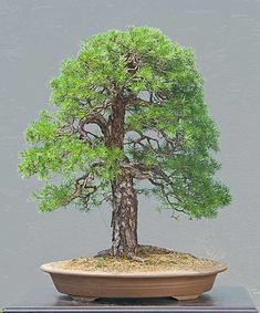 Just an amazing tree by walter pall