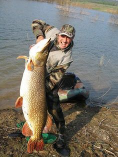 ITALY: World record size pike caught! This incredible world record size northern pike weighed in at 52 pounds (24kg) – just a few pounds shy of the world record pike #fishing #hunting #fisherman #fish http://tacklepoint.com (Sportswear, Reels, Accessories, Lures, Terminal Tackle, Rods)