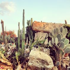 The sunny allure of a cactus garden. Desert Aesthetic, Desert Dream, Desert Rose, Into The West, Cactus Y Suculentas, Le Far West, Cacti And Succulents, Plein Air, Mother Nature