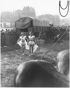 Willy Ronis - Le Zoo, Circus Achille Zavatta, Paris, S)