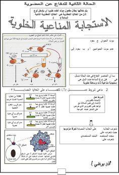 جديد ملخص المناعة كاملة Neurons, Urdu Quotes, Bullet Journal, Nerve Cells
