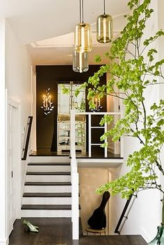 modern and eclectic foyer. Black and white, chic lighting + giant green plant.