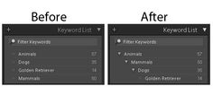 Taming the Lightroom keyword chaos