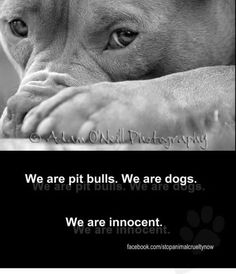 Educate, don't discriminate! We are pit bulls. We are DOGS. We are innocent!!