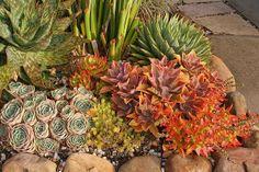Sherman Garden Succulents