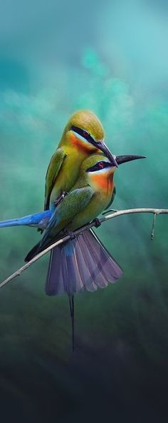 Birds in love - Reminds me of how one should always feel protected by their lover, not frightened or harmed.