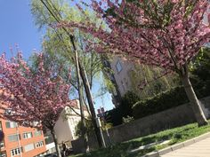 #nature #beautiful #Brno #pinktree #lovethis