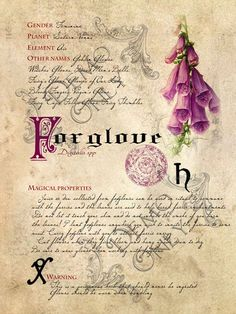 Grimoire, Spell, Herbs and Book of Shadows Pages, Practical Magic; The Cackling Cauldron ~ Book of Shadows: Spell set 3 - plants - Magic Herbs, Herbal Magic, Images Vintage, Vintage Diy, Vintage Paper, Magick, Witchcraft, Wiccan, Collages D'images