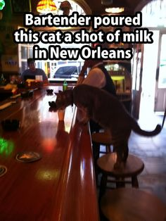 A cat sauntered up to the bar and leapt on to a stool. The bartender didn't hesitate. He poured a shot of milk and set it in front of the cat. As you can see, the dry cat, is lapping up the milk.